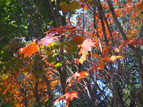 森林公園 003-1.jpg